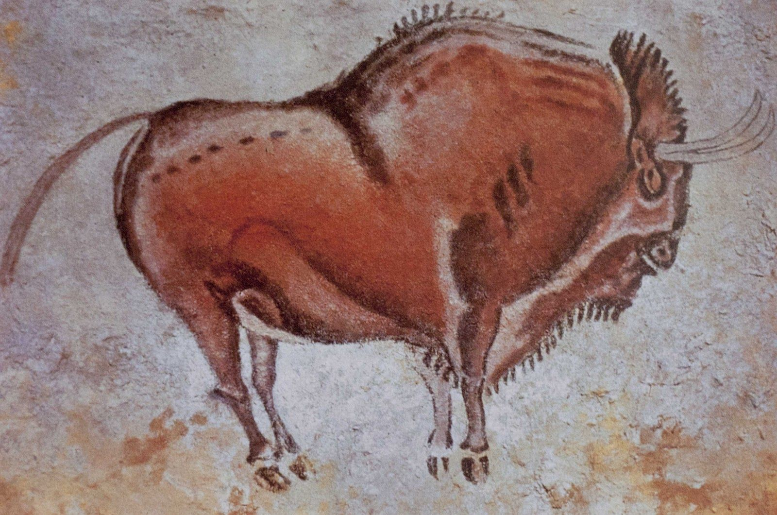 Bison Cave Painting From Altamira Cave Cave Drawings