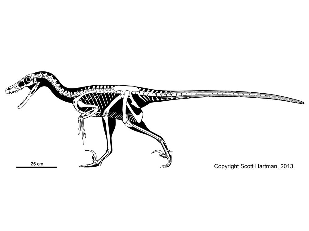 Velociraptor mongoliensis...not what they used in jurassic park ...