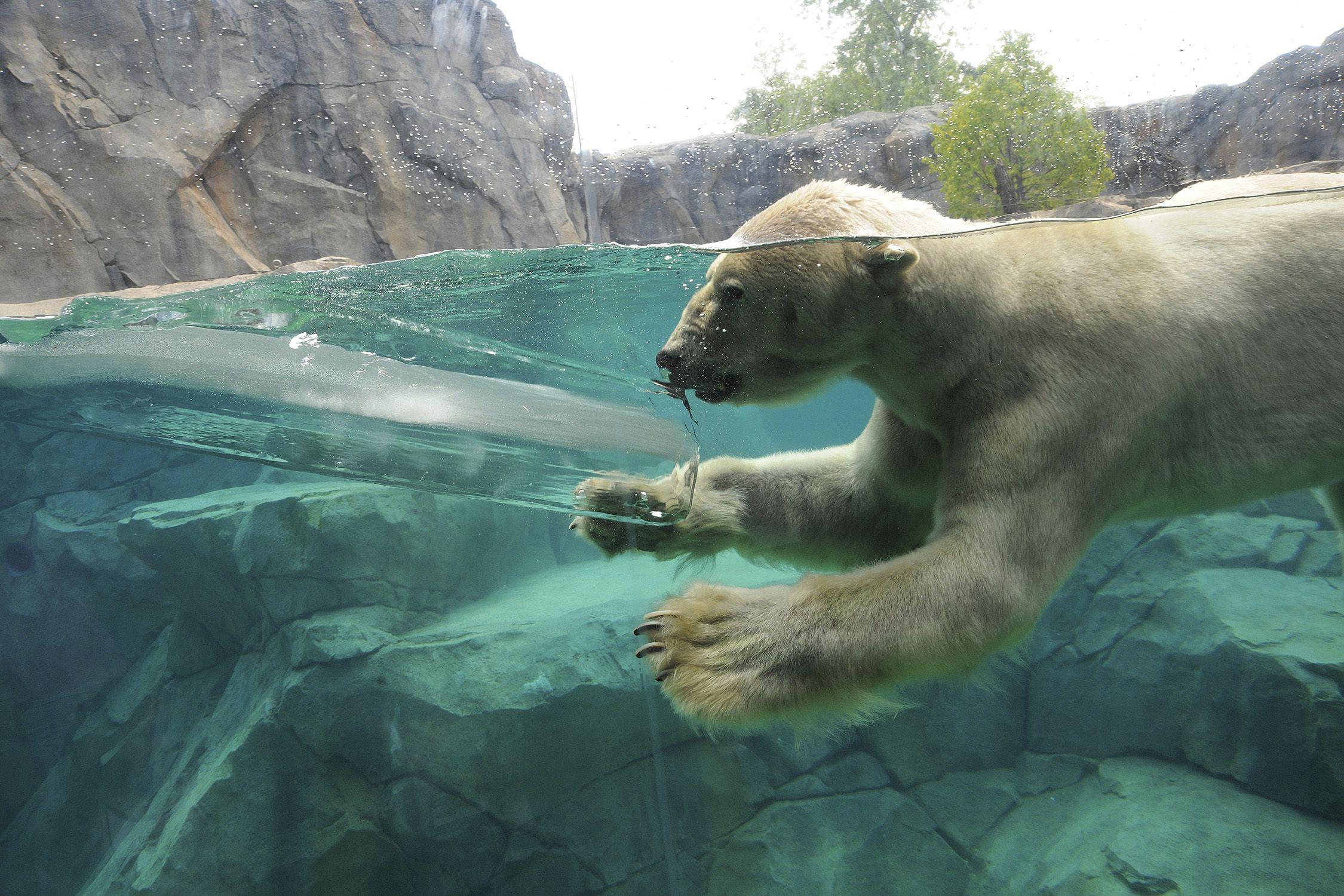 Zoo Animals Keep Their Cool Oso Polar Osos Polares Animales De