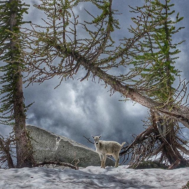 From last month's thru hike in the Enchantments. #pnwexplorations…