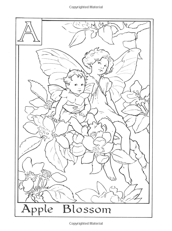 Amazon Com Flower Fairies Alphabet Coloring Book 9780723264965