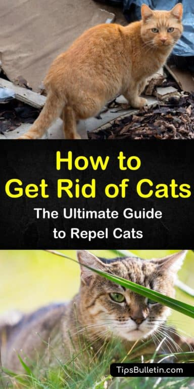 14 Ingenious Ways To Get Rid Of Cats In Your Yard Cat Repellant Outdoor Cat Repellant Cats Smelling