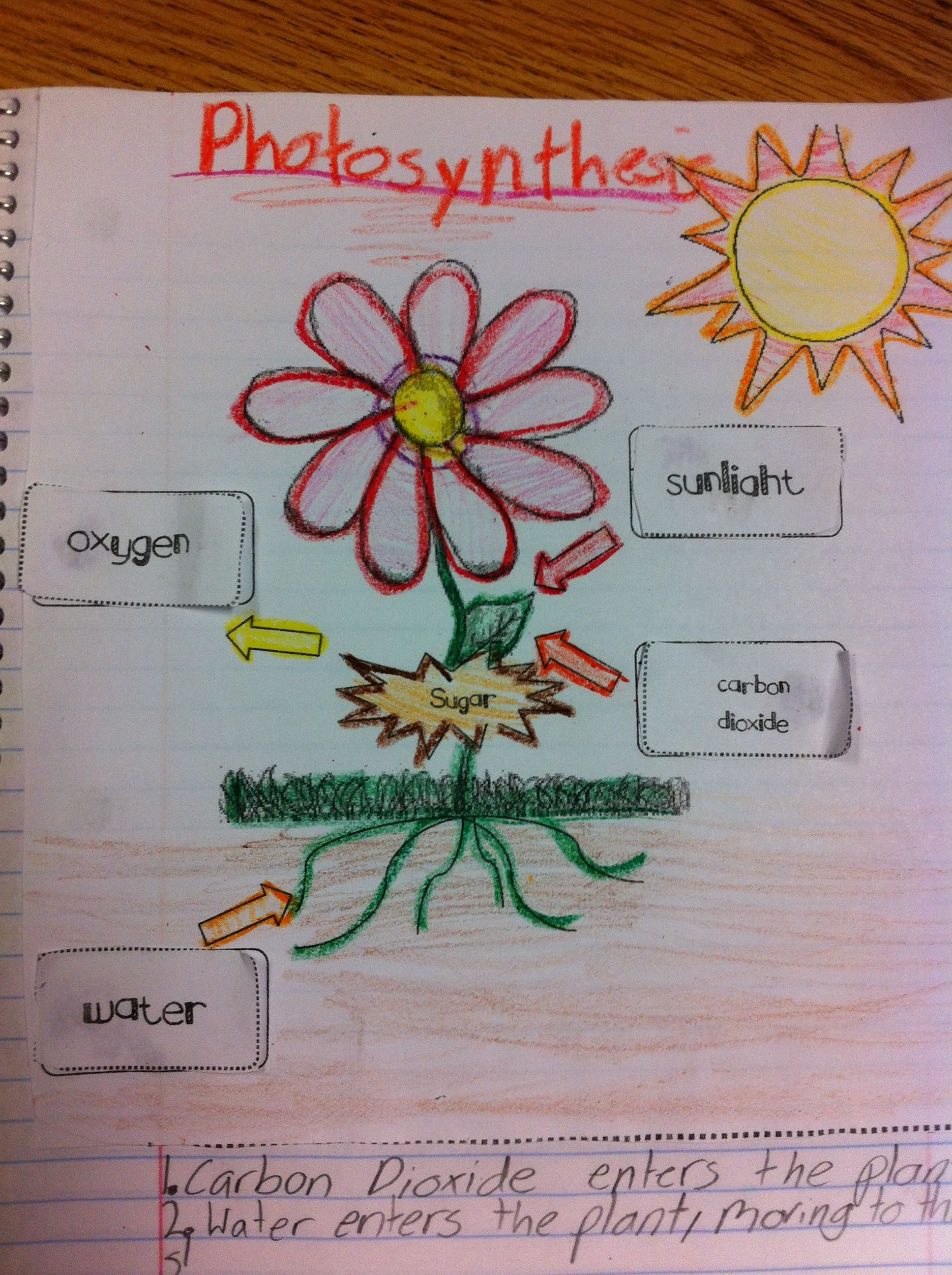 Photosynthesis Interactive Science Journal Entry