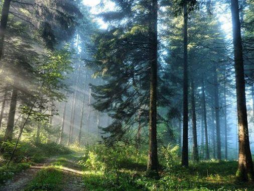 * Кусочек лета в утреннем сосновом лесу. Урал, Россия...