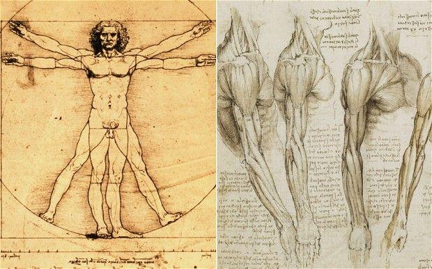 Contour Line Drawing Leonardo Da Vinci : Leonardo da vinci was right all along new medical scans show