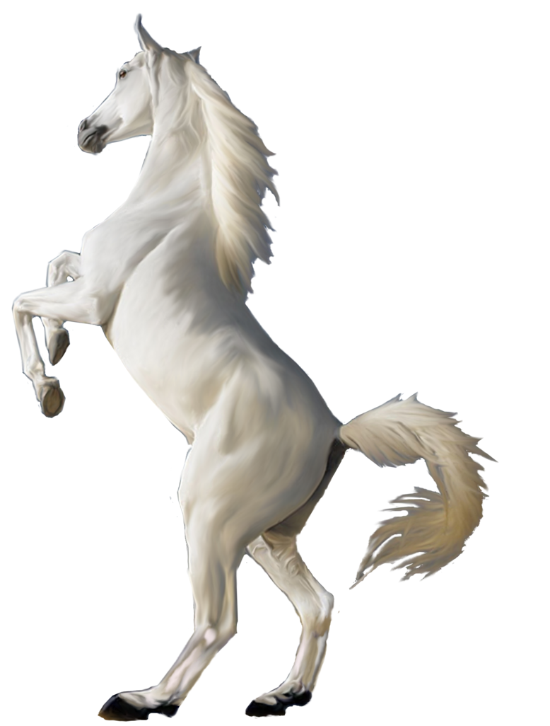 White Horse Images Free Horse Png Horse Clipart Transparent Horses White Horse Images Free Horses