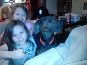 Adopt Catalina On Doberman Pinscher Dog Pet Adoption Doberman