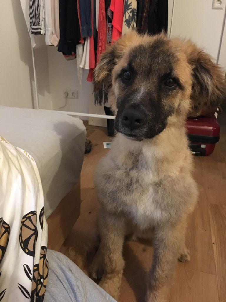 Pumba Mischling Pawshake Adoptable Pets Dogs, Cute