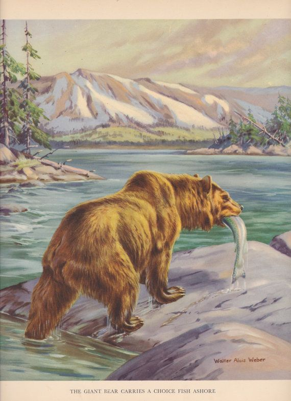 0dd70c695ef Bear carrying fish near river. | Body Art | Animals, Bear catching ...