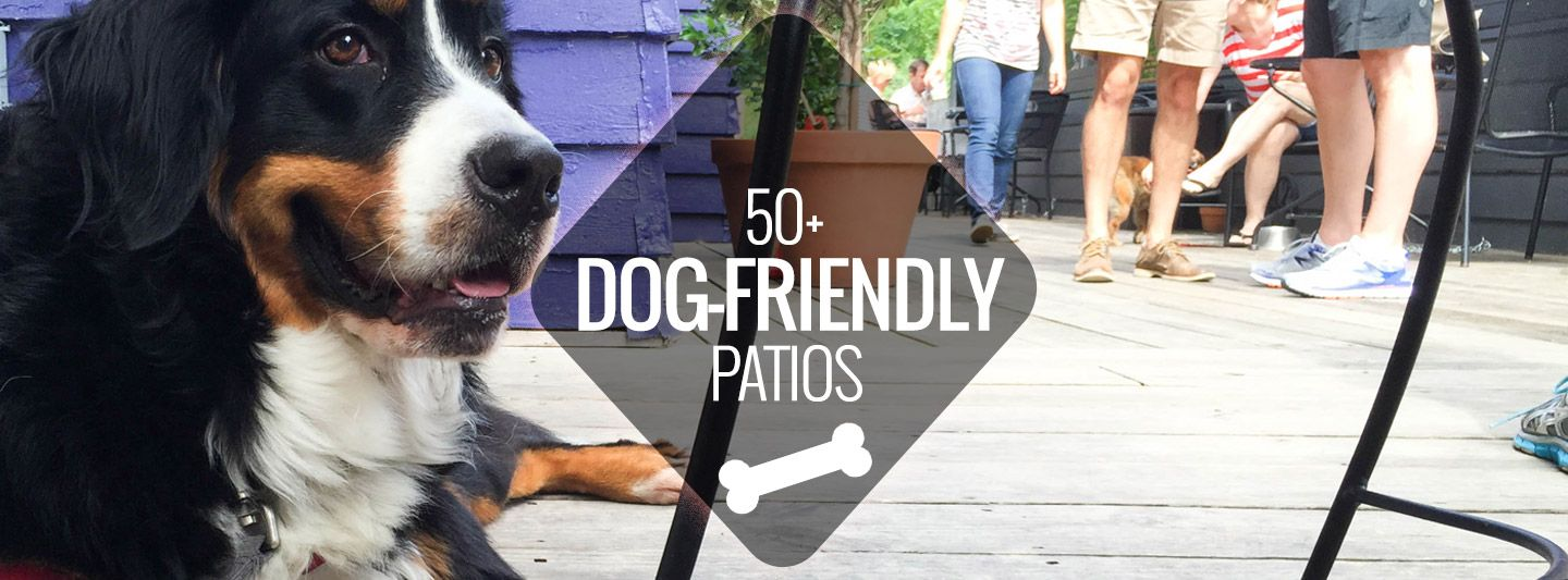 Here Are Over 50 Dog Friendly Restaurants Bars Coffee Shops And
