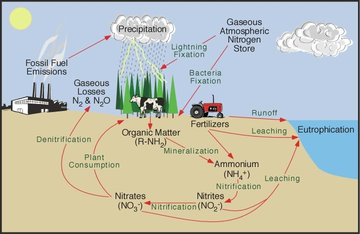 Global Organic Nitrogen And Phosphate Market Study Formulates With