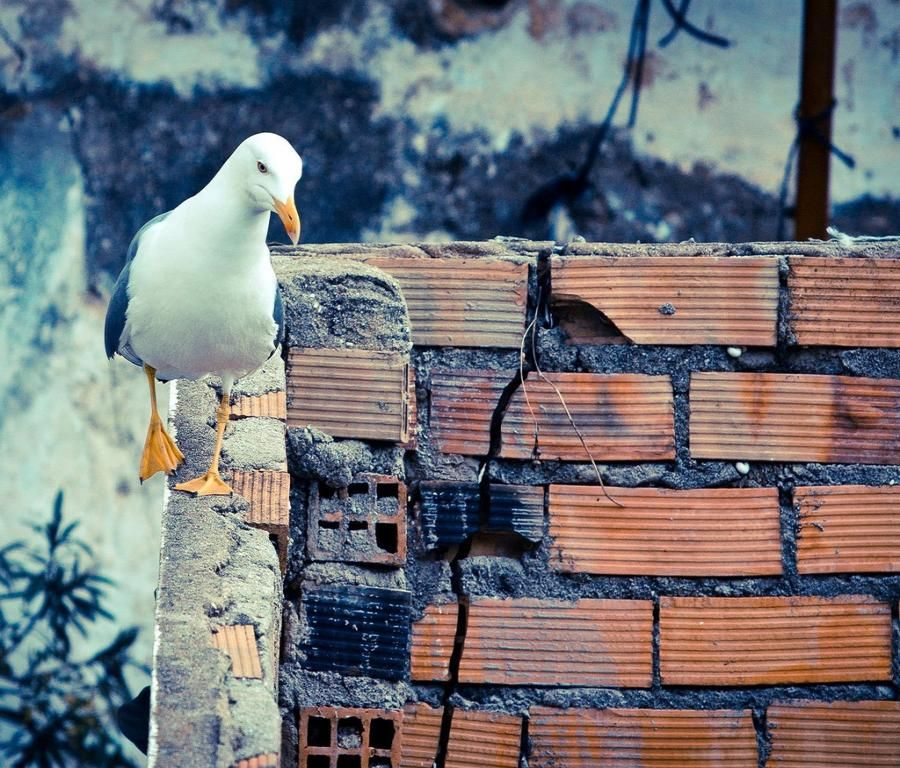 Park Art My WordPress Blog_Watch Birds Of Prey Online Free No Sign Up