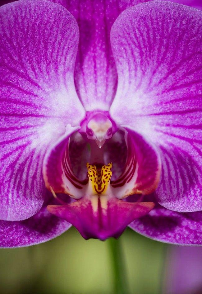Flores incríveis (6)