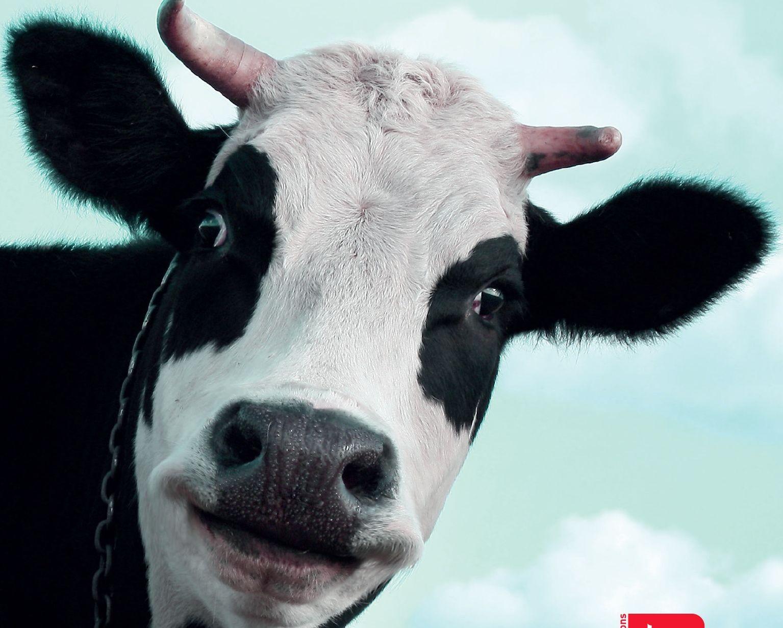 Resultat De Recherche D Images Pour Vache Vache Memes Humour