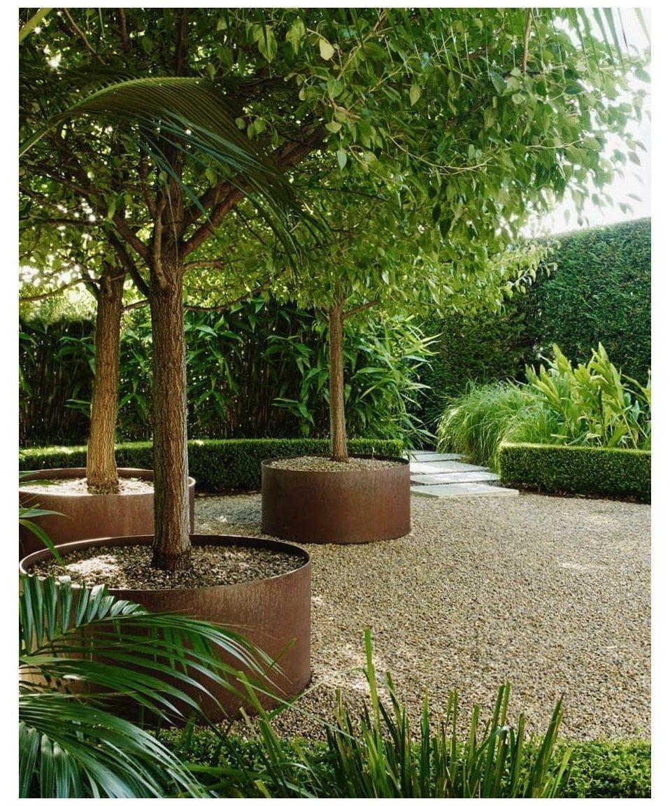 formal garden plant