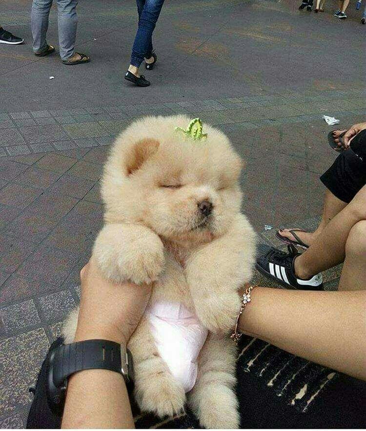 Pin By Hirak Vora On Cute Puppies Cute Baby Animals Puppies