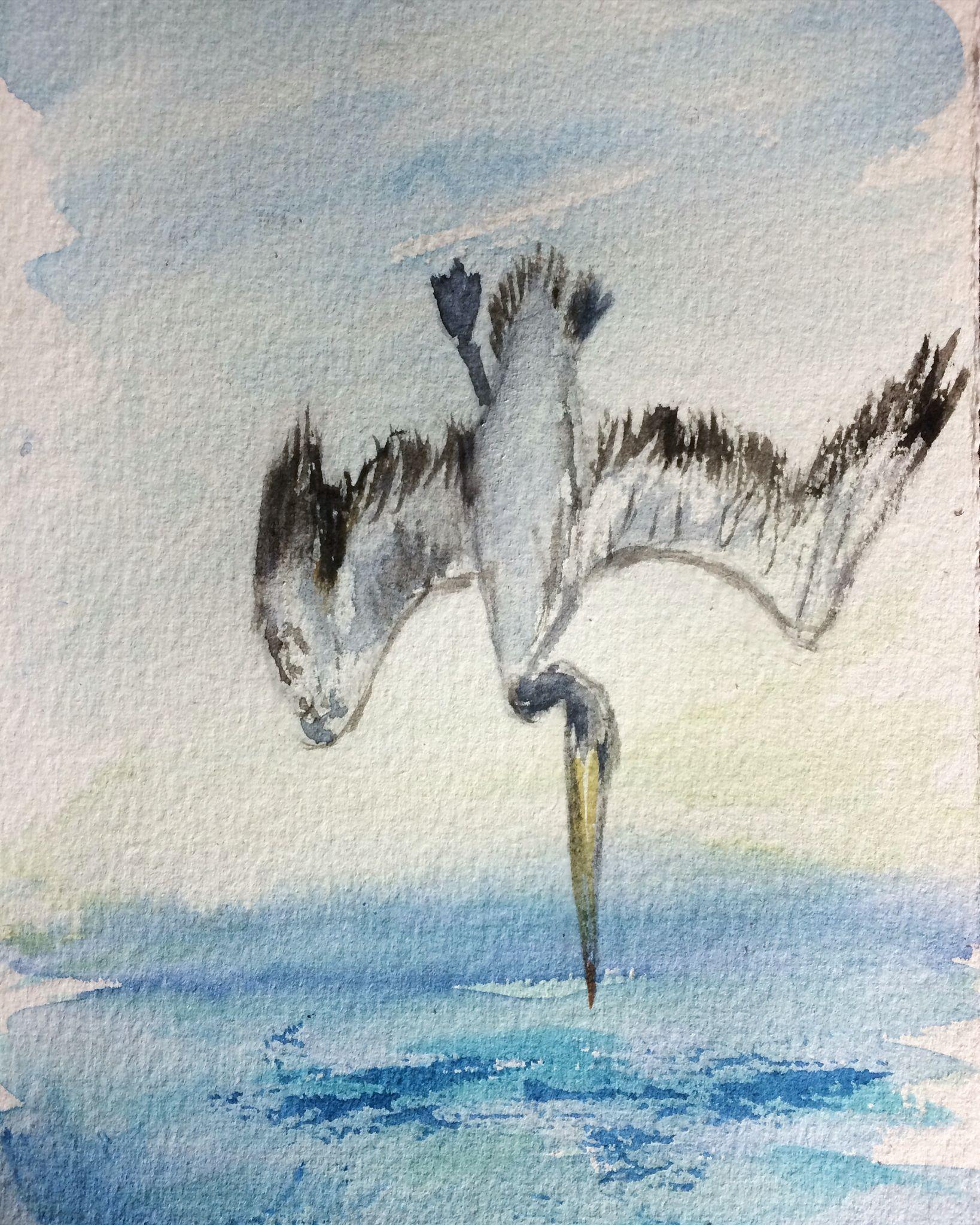 Diving pelican watercolor. See more stephartist.com