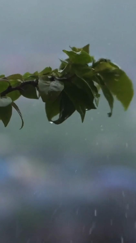 Rain With Music