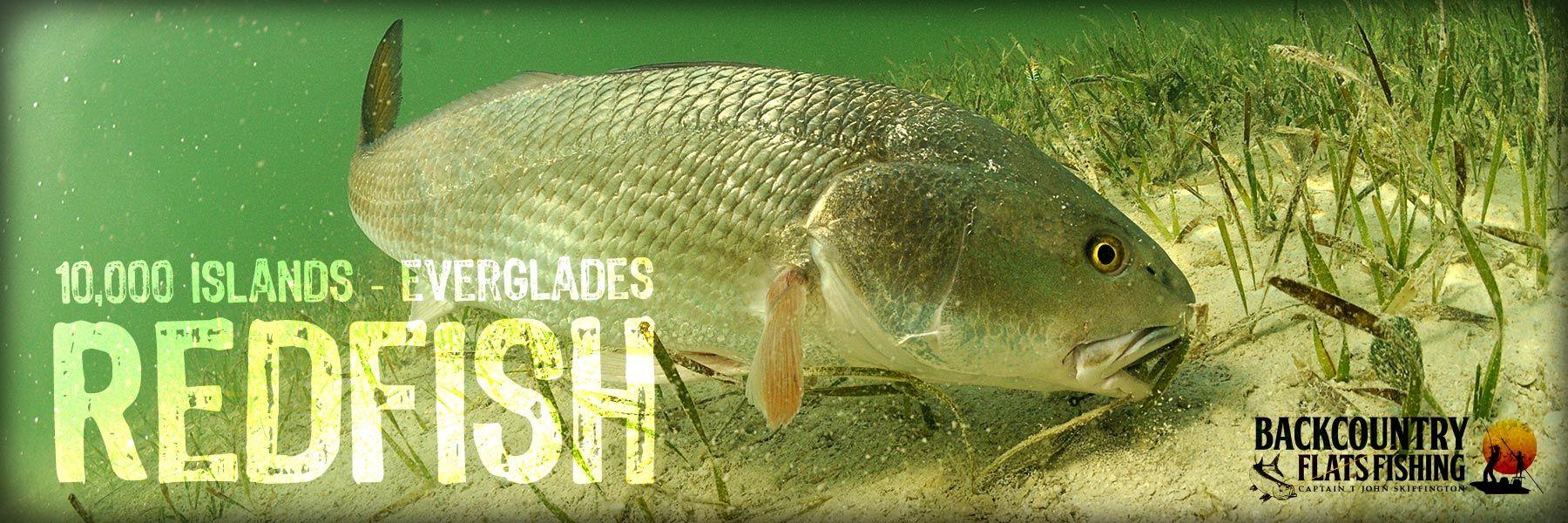 Everglades, 10000 Islands & Naples Fishing Trips with Capt T John Skiffington