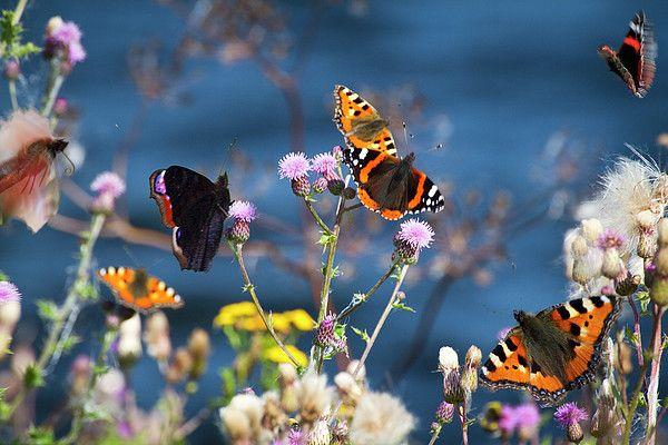 Stunning Butterflies sitting on a flower!