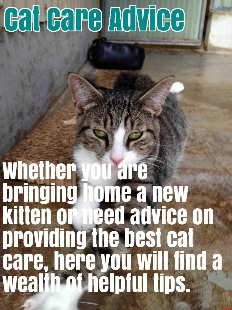 Comprehensive Cat Care Advice Cats Cool Cats Advice