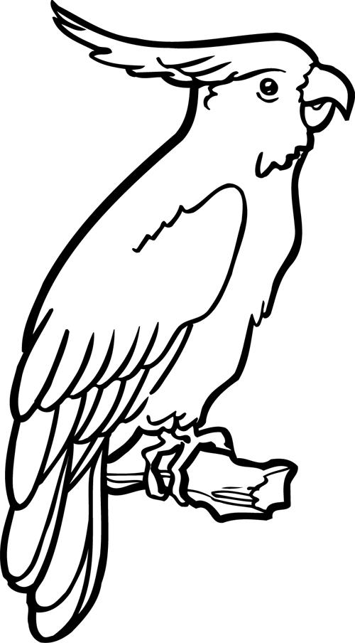 Un perroquet oiseau dessin perroquet coloriage - Perroquet dessin ...