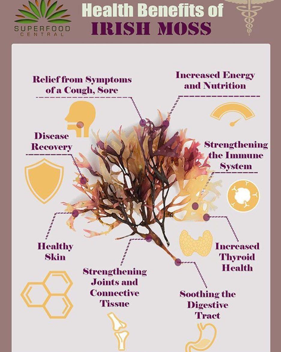 Benefits Of Irish Moss Who Knew Healing Food Sea Moss Smoothie Recipes