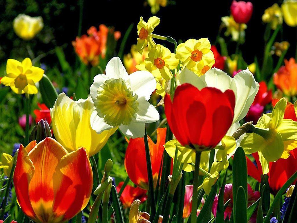 O senhor do jardim sabe, ainda, que cultivar flores não é tomar posse delas. Se tentar fazê-lo, mata-as, perdendo-as para sempre. De resto, essa relação com as flores reproduz-se na relação com outros seres vivos, plantas ou animais, como também na relação entre as pessoas. Cultivar implica não em dominar e possuir, mas deixá-las livres. Livres para que outros possam desfrutar de seu conhecimento e riqueza. A posse é a negação do amor.