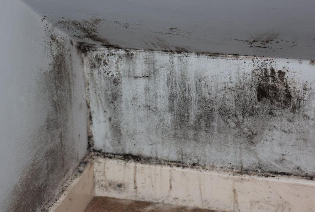 Comment éliminer les moisissures qui envahissent la maison