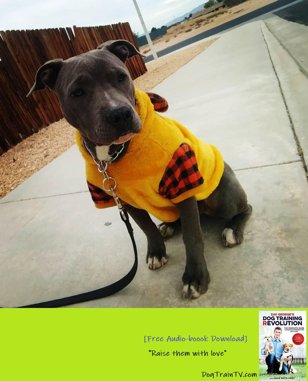 Newest 5 Member Duchess Apbt Bootcamp Walk Duck Pictureoftheday Cute Puppy Jump Start Program We Look Forward To Sharing Dog Training Puppy Jumps Dogs
