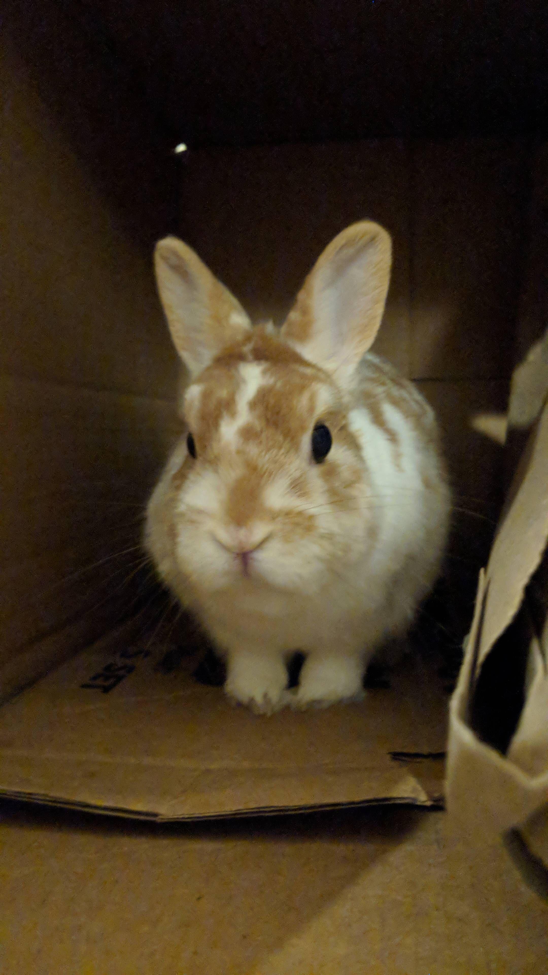 Cute house rabbit breeds the best bunny ideas for rabbit
