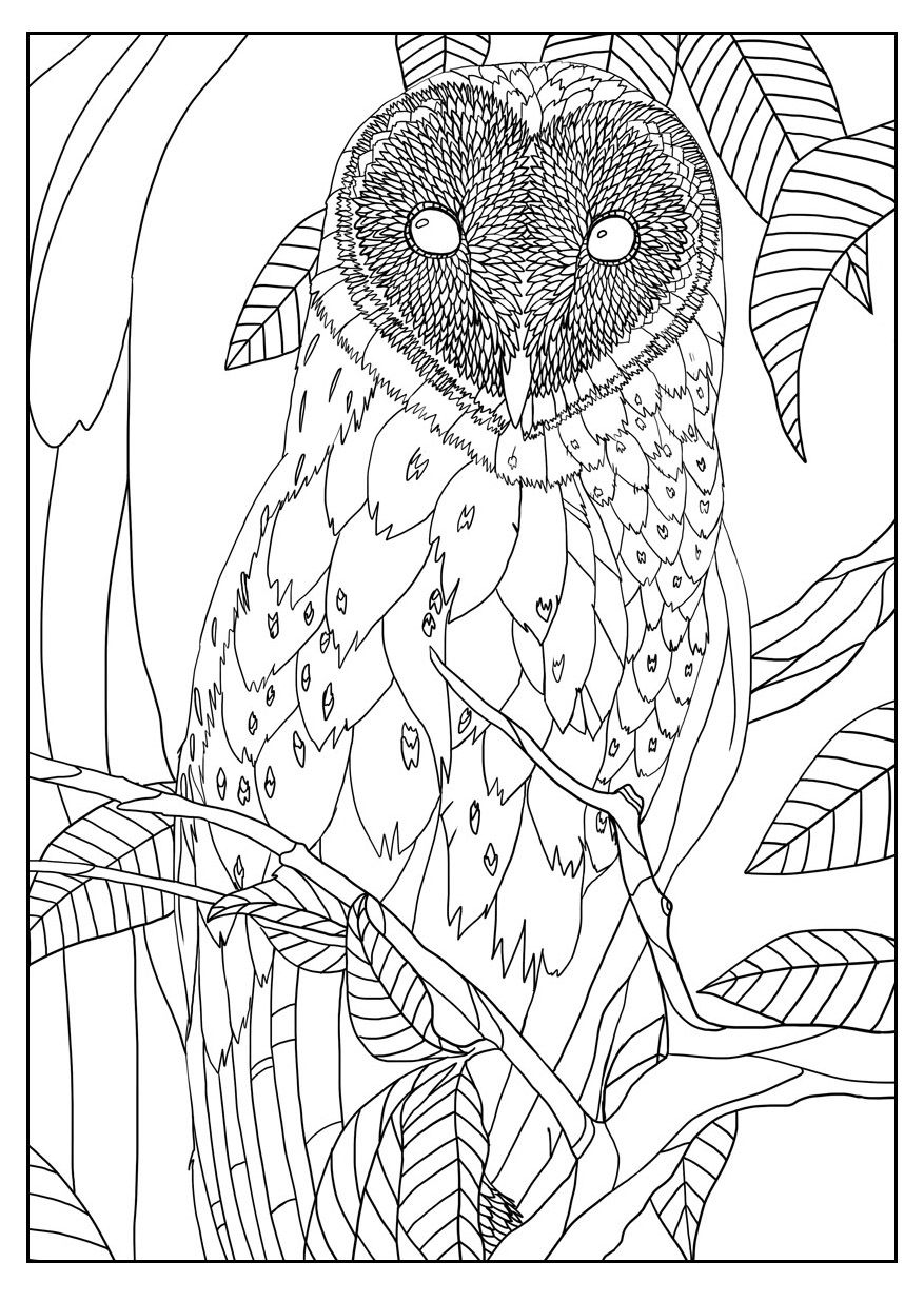 Barn Owl By Mizu Owls Coloring Pages For Adults Just Color