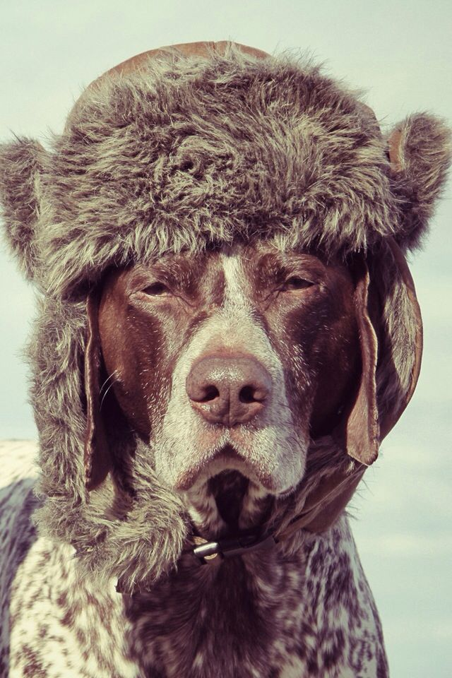 Hahaha Dog With A Winter Hat On My Dog Will Never Let Me Do That Dog Wallpapers Dog Wallpaper Winter Hats Dogs