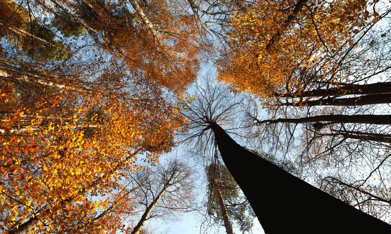 Download Nature Autumn Trees Crown Hdq Wallpaper High Quality Hd Wallpaper In 2k 4k 5k 8k 10k Resolution For Your Desktop Autumn Trees Wallpaper New Wallpaper