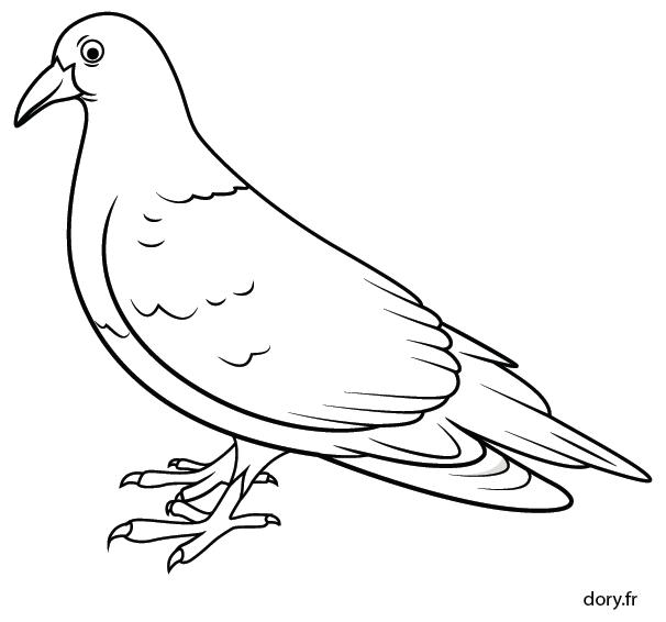Coloriage Le Chien Et Le Pigeon.Dessin A Colorier Un Pigeon Activite Pigeon Birds Et Animals
