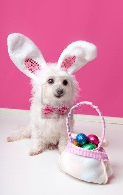 Stock Photo Cute Little Dogs Pet Costumes Little Dogs