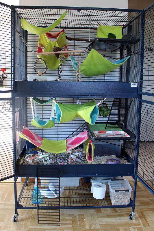 Bildergebnis Fur Savic Suite Royal Xl Ratten Frettchen Wolle Kaufen