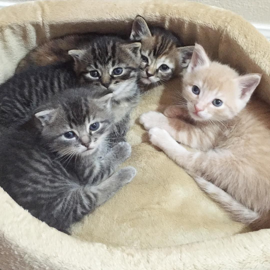 Kitten Foster Home Seattle Wa On Instagram The Olives Collect All Four Kittens Cutest Kitten Cute Animals