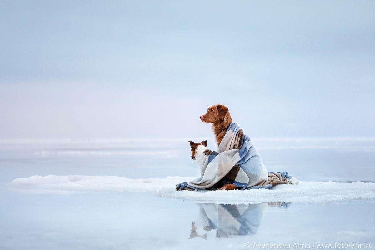 on the ice - null