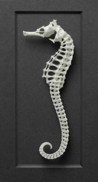Picture Print Art Ocean Animal Fish Skeleton A4 Poster X-Ray of a Seahorse