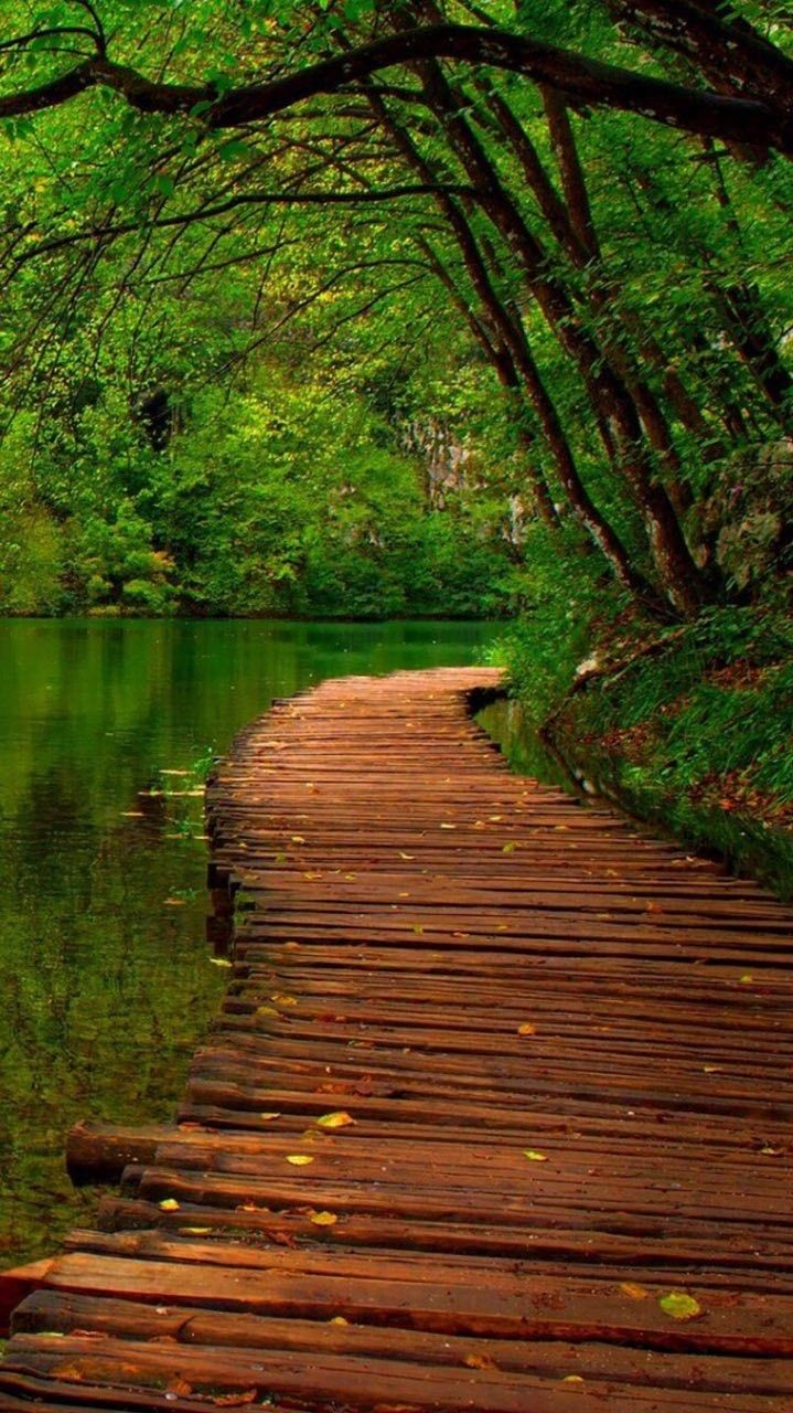 Pin By Yani Terra On Foto Alam In 2020 Forest Wallpaper Iphone Iphone Backgrounds Nature Forest Wallpaper