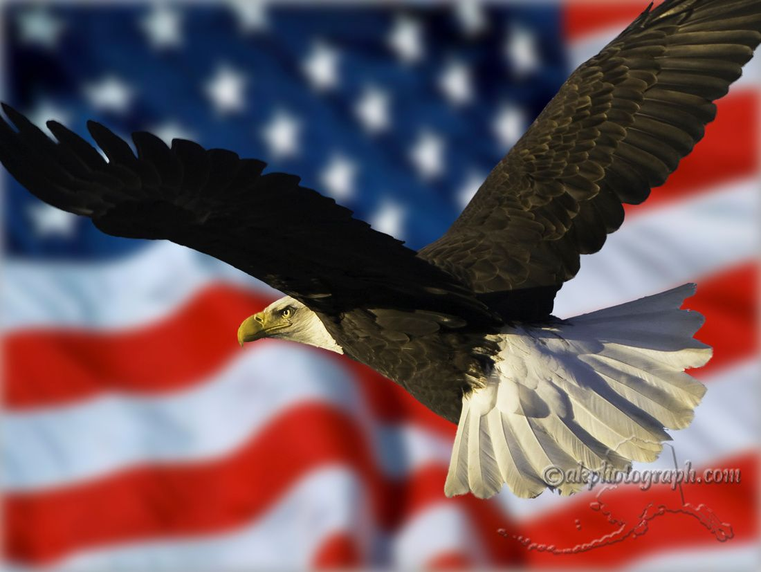 Eagles And Flags Bald Eagle Eagle Wallpaper Eagle
