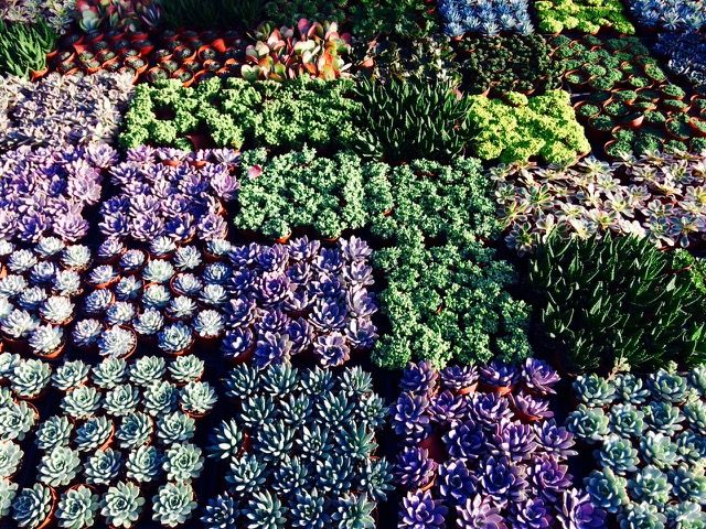 Orange County Plant Center Oc Whole Garden And Nursery Vendor Succulents Contact Form