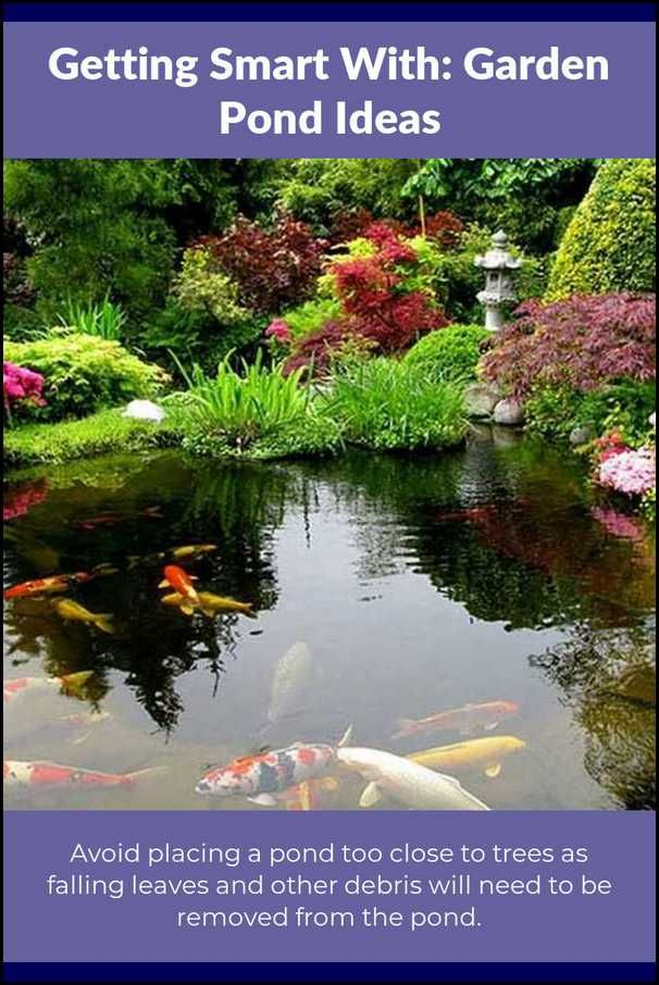 Key Approaches For Getting The Best From Your Pond Garden 400 x 300