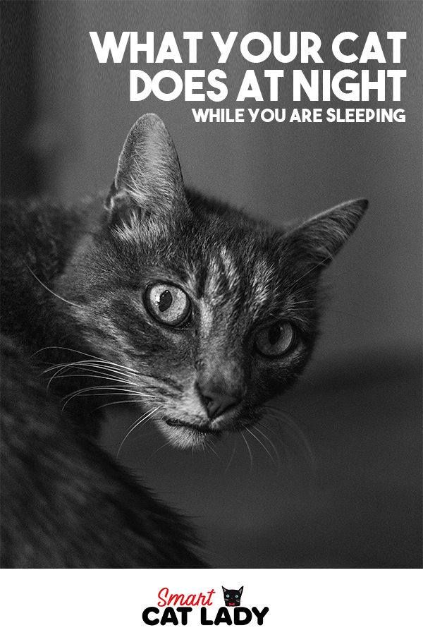 Here's What Your Cat Does At Night While You Are Sleeping