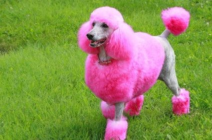 Who Doesn T Love A Neon Dyed Pup Pink Animals Popular Dog