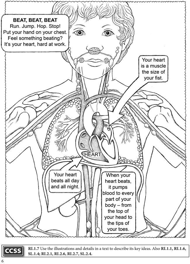 Human Body Coloring Book Sketch Page