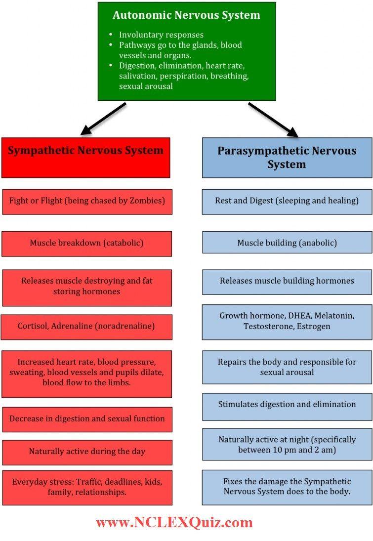 Sympathetic vs Parasympathetic Nervous System Chart