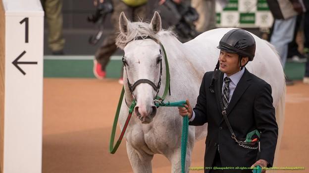 アイスフォーリス「じゃあ皆さんしっかり撮ってくださいよ、こっち?こっち向けばいいの?」【150315中山11R中山牝馬S】 #見つめうま  http://photozou.jp/photo/show/745137/219997172…