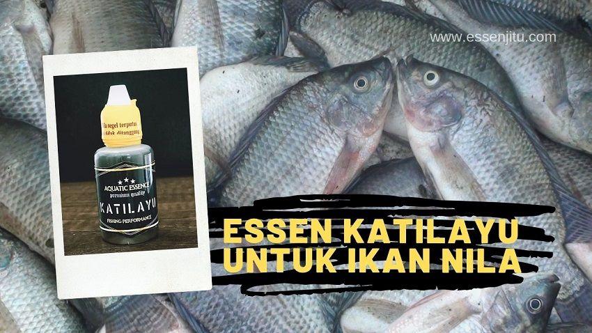 Essen Katilayu Untuk Ikan Nila